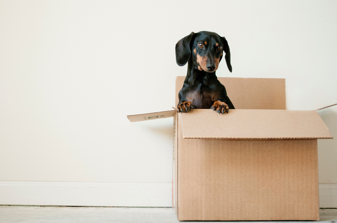 The Surprisingly Simple Guide to Eco Friendly Moving