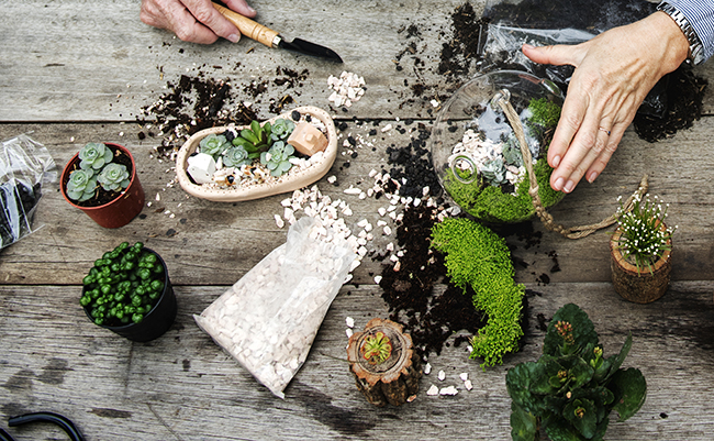 Image of people making a terrarium with miniature plants