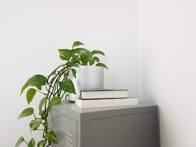 photo of an indoor plant to clean out indoor air pollution