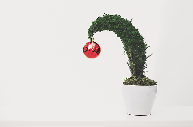 Image of a potted plant which is a great zero waste holiday tip for lowering your holiday waste