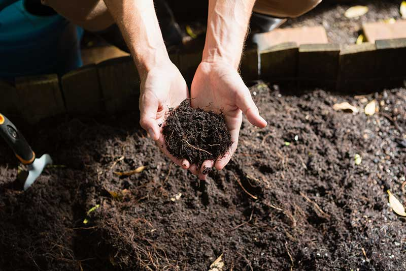 Image of hands holding some soil