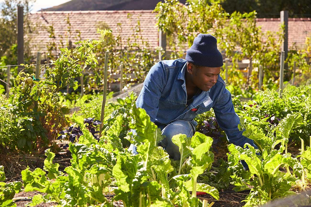 Image of a man tending a garden