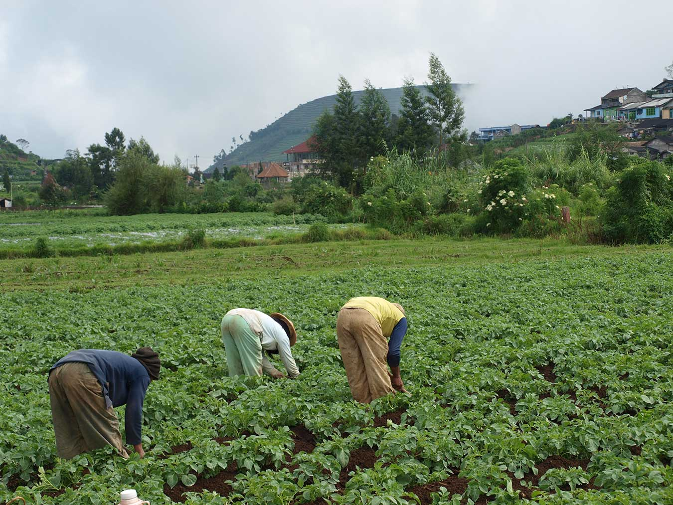 Image of farmers in a field